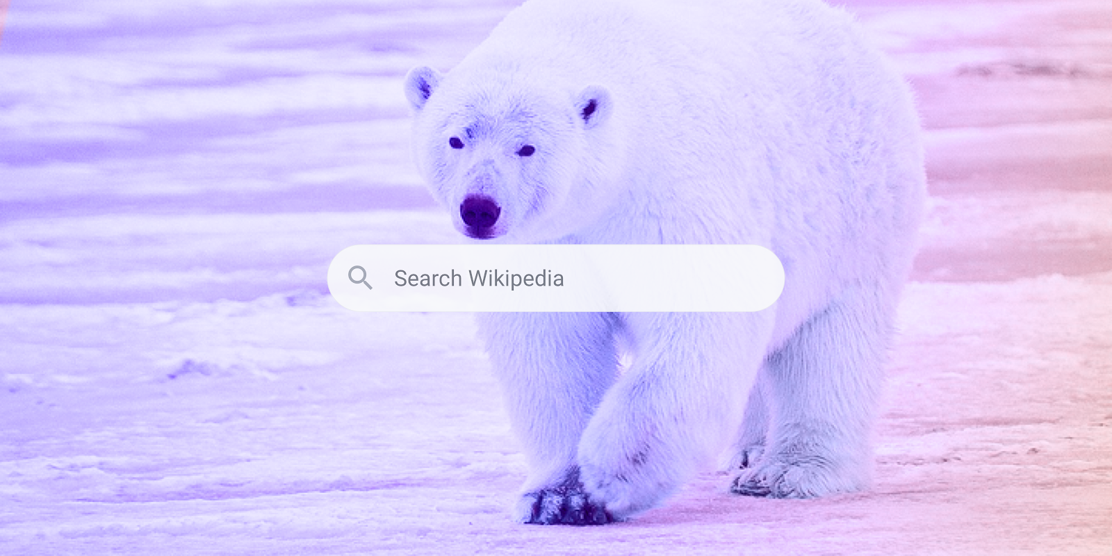 In search of the perfect search for Wikipedia